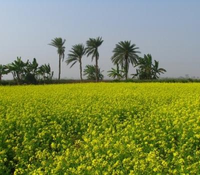 Expoziţie foto: natura, oamenii şi viaţa rurală din  Bengalul de Vest